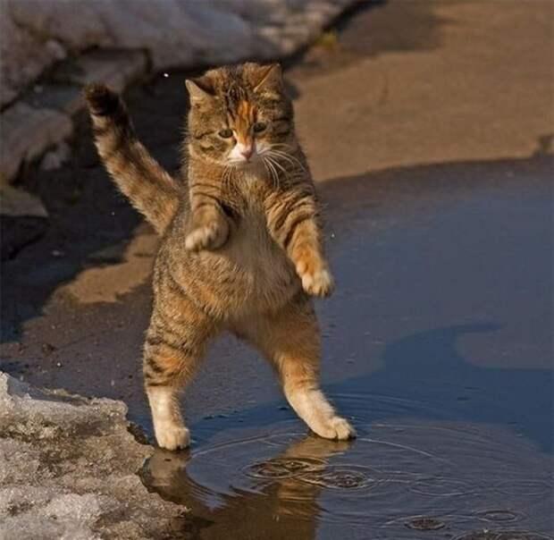 Очень забавный кот котека, позитив, фото