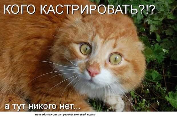 Котодром - 2 от Михалыча!