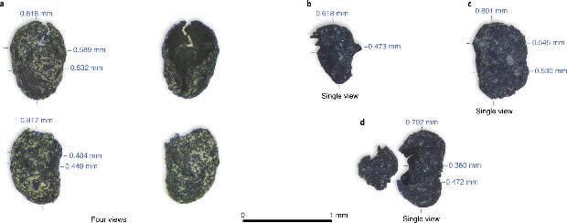 В США обнаружили обугленные семена табака возрастом более 12 тысяч лет
