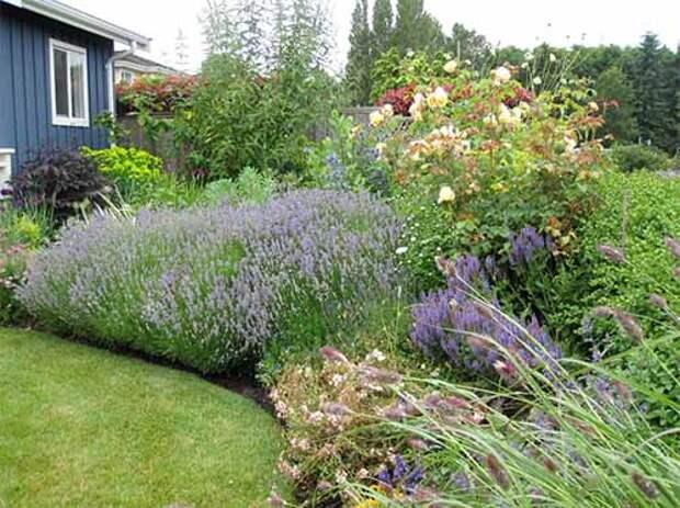 дизайн сада своими руками клумба из многолетников