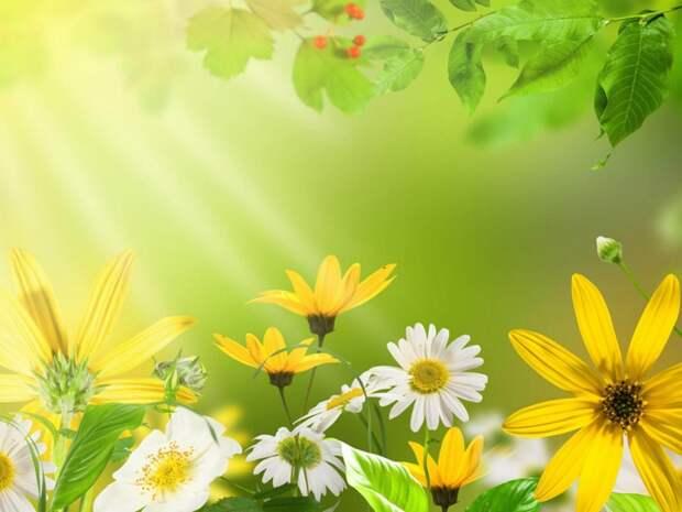 5227673_Flowersdaisybrightcolorful1536x2048 (700x525, 232Kb)