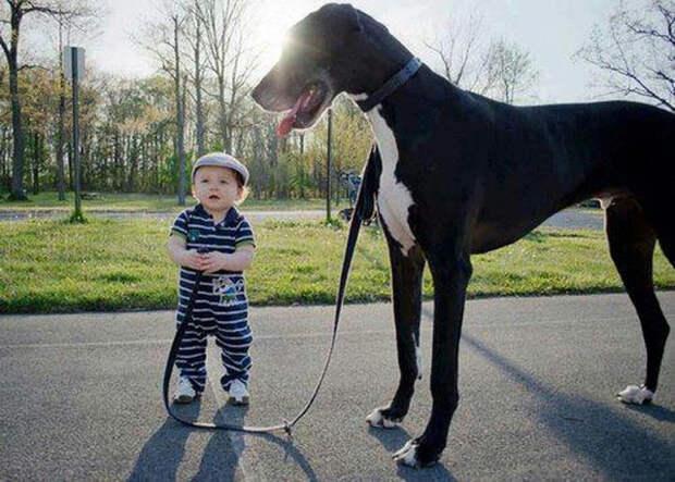 дети должны расти с домашними животными (14)