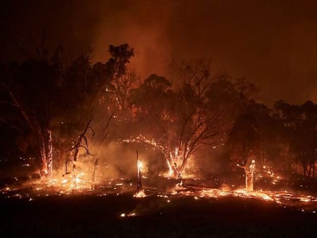 Мегапожар в Новом Южном Уэльсе, который распространился на 600 тысяч гектаров, январь 2020. Фото: Kiran Ridley / Greenpeace