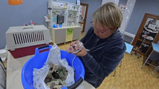 Многодетная мать: такого количества щенков хозяева точно не ожидали!