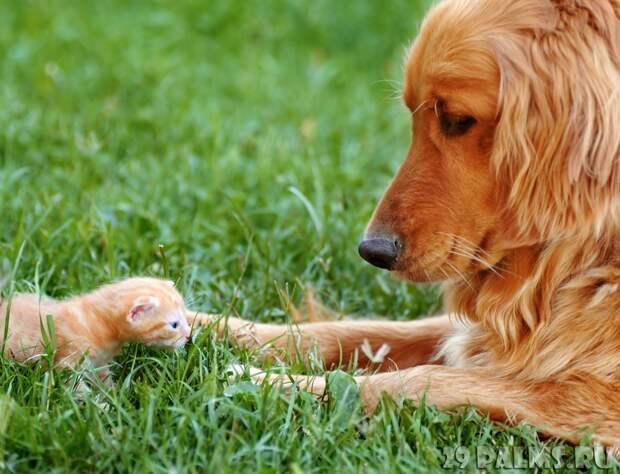 Как кошка с собакой. Часть 1 животные, коты, кошки, собаки, фото, юмор