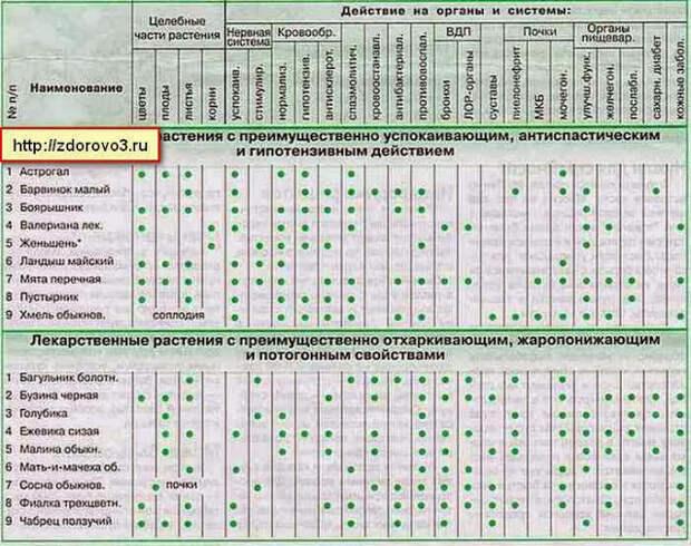 lekarstvennye-rasteniya1