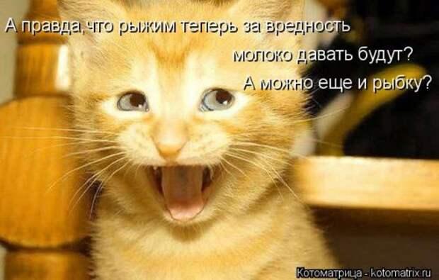 Новая котоматрица недели (27 фото)