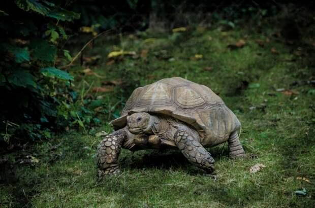 """Шансов пережить настоящую московскую зиму у """"выпущенных на волю"""" черепах мало. Фото: unsplash.com"""
