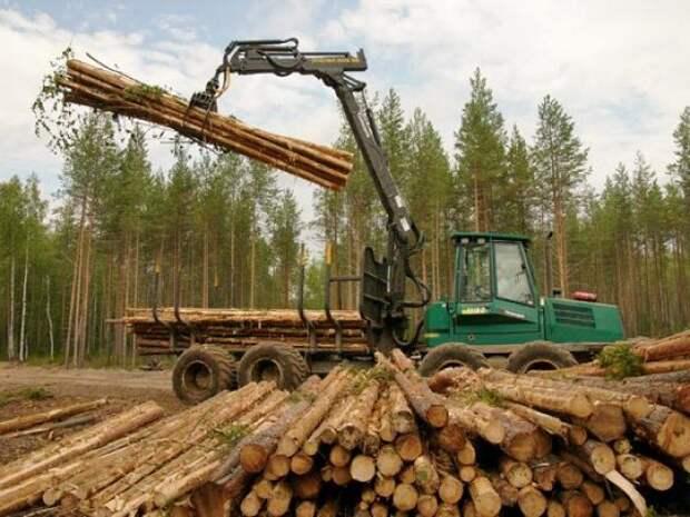 Ограничения на торговлю лесом озадачило Финляндию. Финны начали что то подозревать