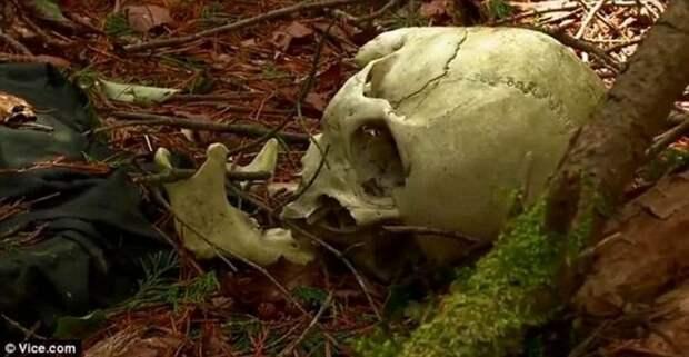 Лес самоубийц Аокигахара — одно из самых жутких мест в Японии и на планете