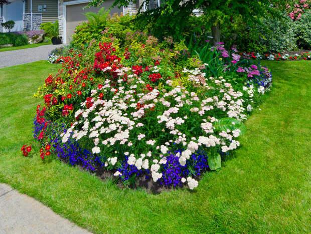 Придайте саду дополнительный объем с помощью цветущих растений