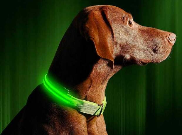 Ошейник с подсветкой для выгула собаки в темноте
