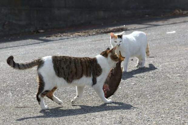 Поиск семьи животные, коты, это интересно