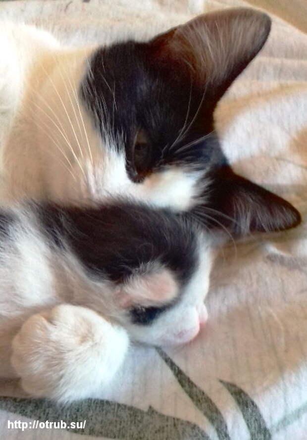 А у нас в деревне кошка родила двоих котят... Бронебойный заряд ми-ми-мишности и няшности