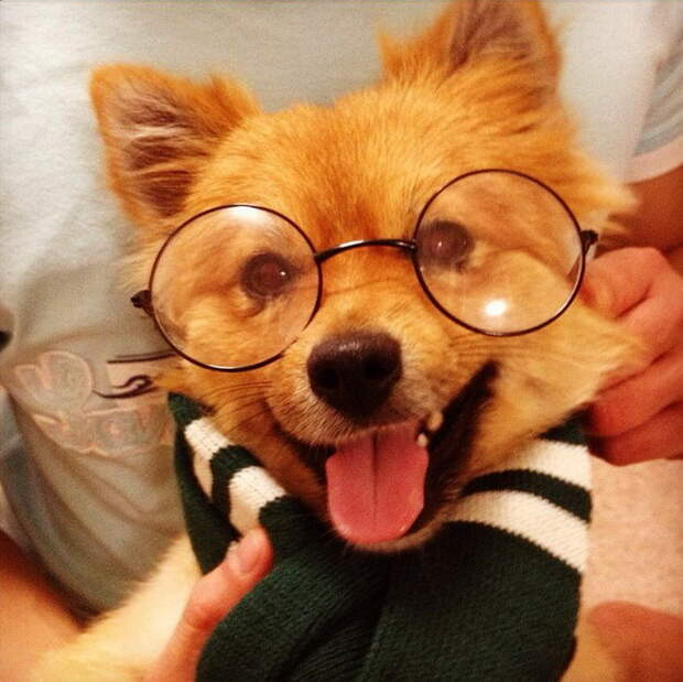 Собаки-модники учат быть стильными