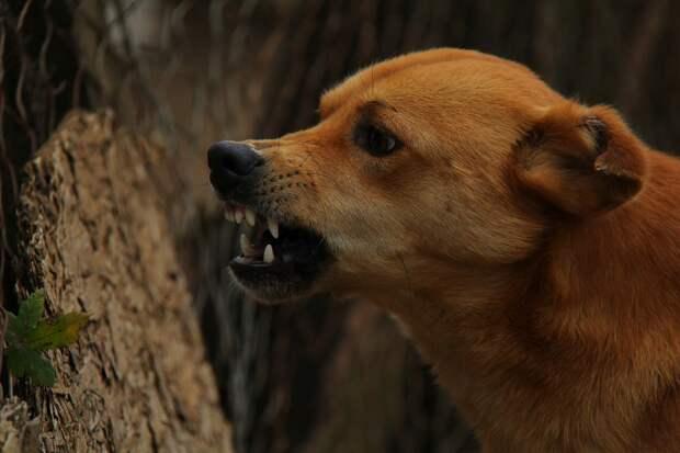 В Удмуртии зарегистрировали 38 случаев бешенства у животных