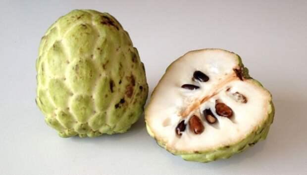 2. Сахарное яблоко (аннона чешуйчатая) факты, фрукты, экзотика