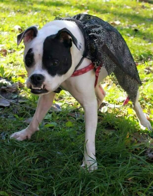 Эта собака не из Фотошопа, это реальный и милый пёс аномалия, любовь, собака