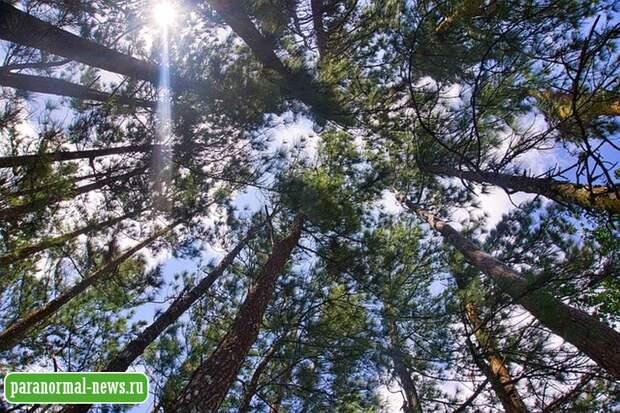 Почти пропавшие: Как неведомая сила заманивает людей в чащу леса