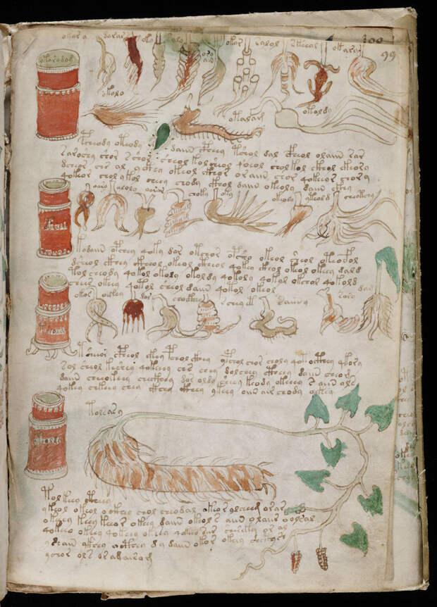 Один из самых загадочных текстов в истории: расшифрован манускрипт Войнича