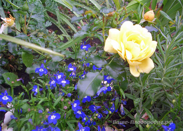 Красота и аромат: для всех, кто скучает по своему саду!