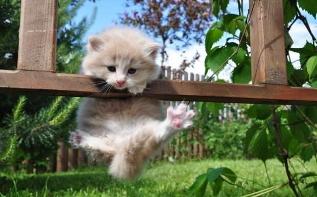 20 котов, которые постигли тайны ниндзя коты, найди кота, ниндзя