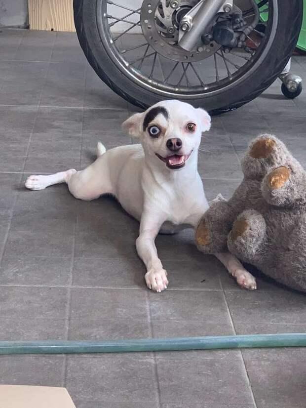 Пёсик с «изюминкой» встретил свое счастье, и теперь им восхищается не только хозяйка