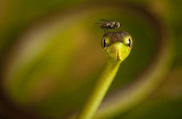 Природа может удивлять!
