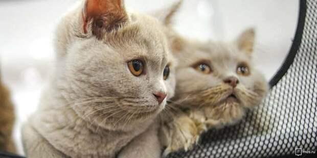 Акция в поддержку животных из приютов пройдет в Москве