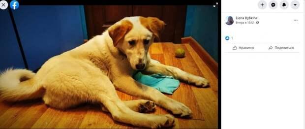 Фото дня: потерянный пес с 1-го Краснокурсантского надеется вернуться домой