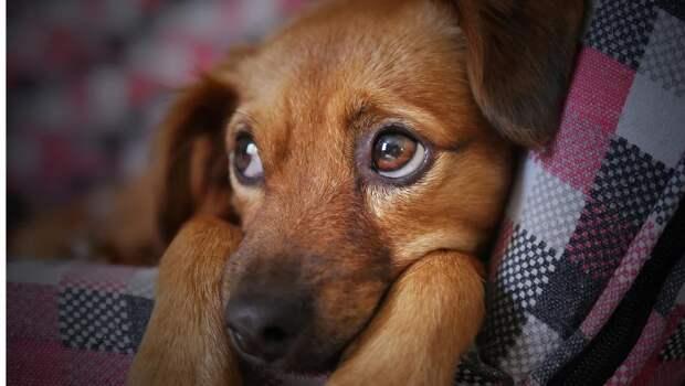 Ветеринарная служба РК готова забрать в собственность участок в Симферополе для содержания агрессивных животных