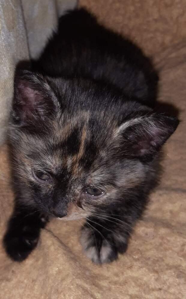 Три дня спустя... Какая жизнь у котенка, которого нам подкинули. Мои сомнения и переживания