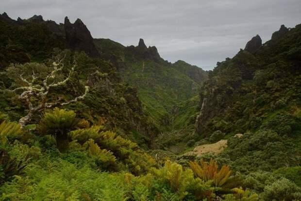 Несчастье острова Гоф: мыши оказались страшнее, чем полагали ученые