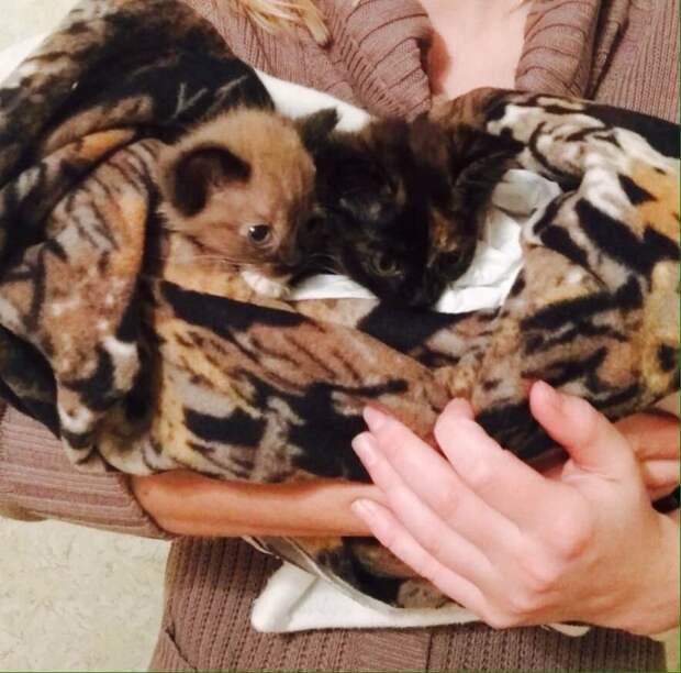 Пес в Омске спас заживо похороненных котят