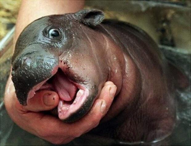 милые животные  у которых не получилось выглядеть устрашающе (5)