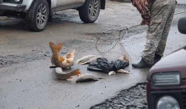 В Ростове подсчитывают погибшую рыбу после аварии на Северном водохранилище