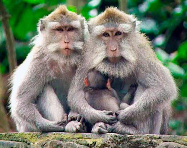 Под Саратовом задержали пассажира поезда за попытку продать редких обезьян на 1 млн рублей