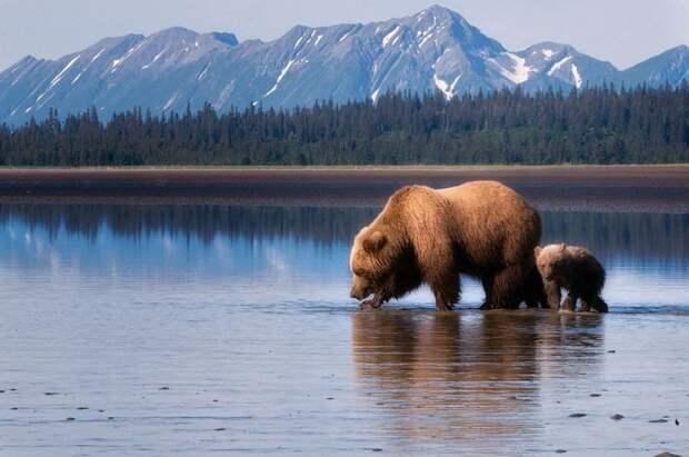 Аляска Земли, интересное, история, колонии, политика, россия, страны, упущенные