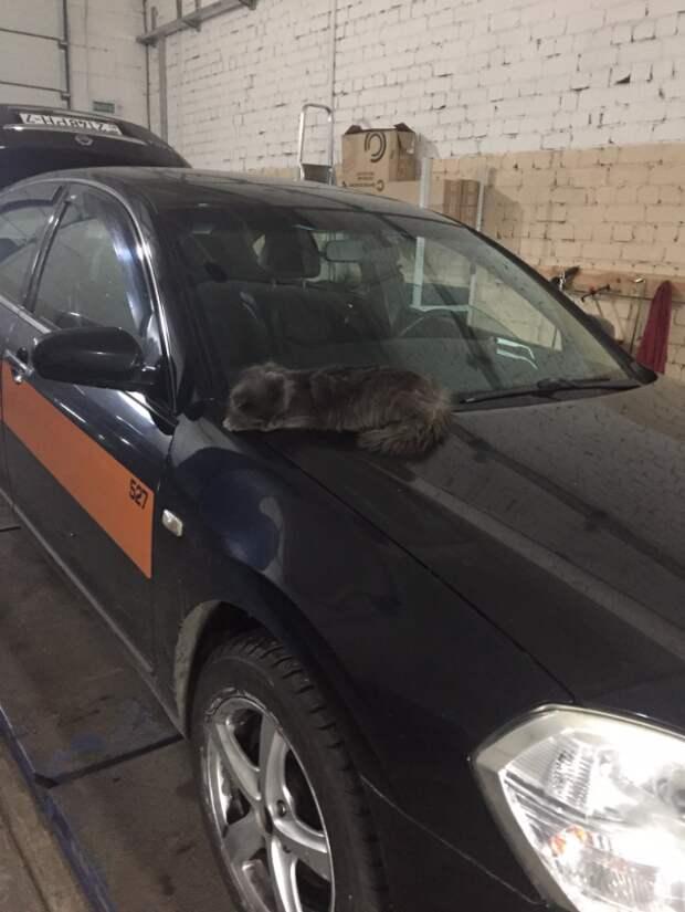 Кот который живет в СТО Кот любитель автомобилей, авто кот, кличка кота мотюль