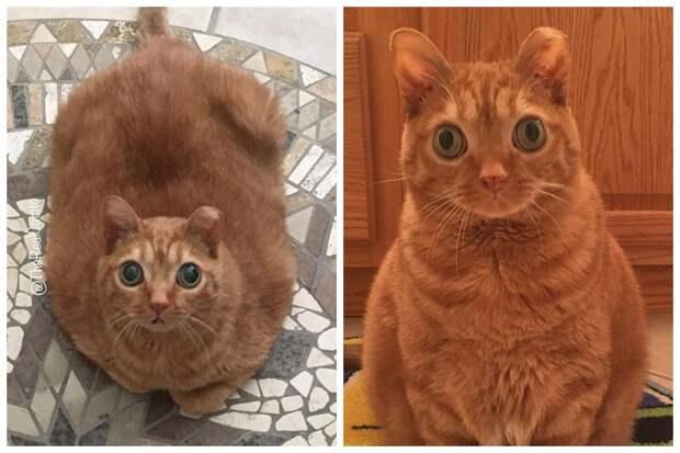 Кошка Картошка стала новой звездой интернета, и все благодаря ее странным глазам