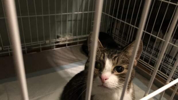 Москвичи смогут принять участие в забеге в поддержку бездомных животных 25 апреля