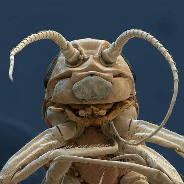 Личинка майского жука. Летает где-то поблизости.