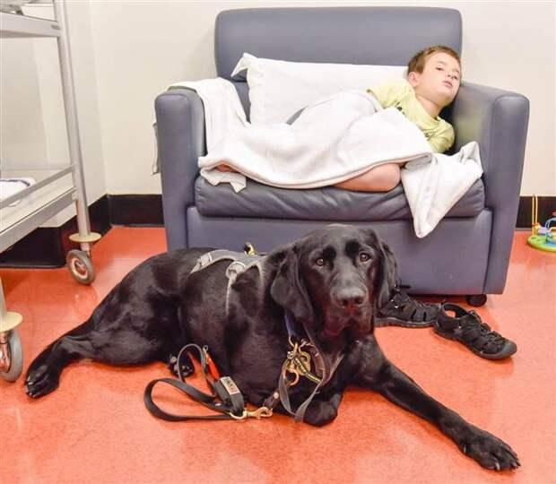 Пес-помощник не оставил своего подопечного и на больничной койке