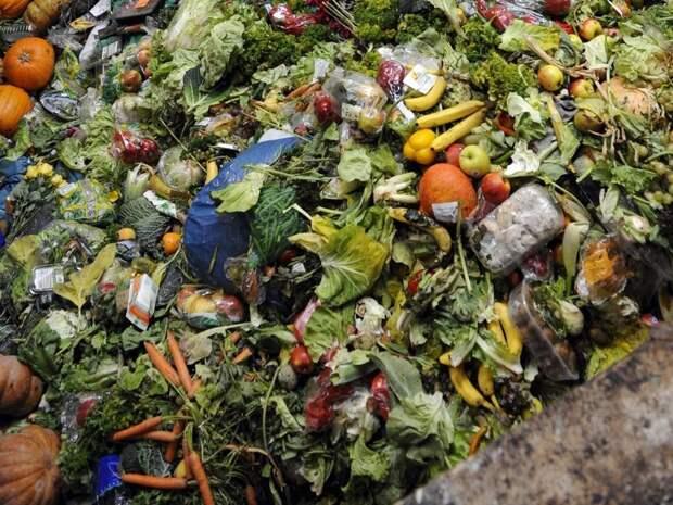 Сроки разложения мусора в фотографиях