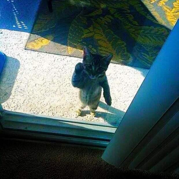 коты хотят попасть в дом