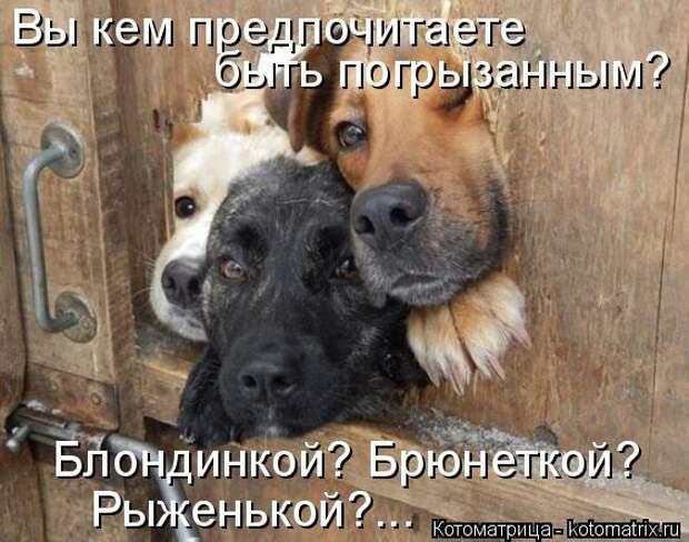Собаки - охраняки