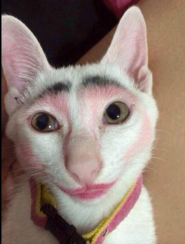 Макияж для кошки.