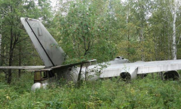 Самолет-призрак времен Второй мировой: случайная находка грибника