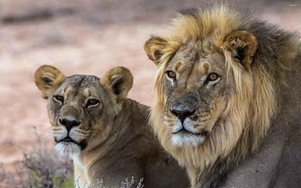 Ученый выяснил, почему самцы млекопитающих крупнее самок