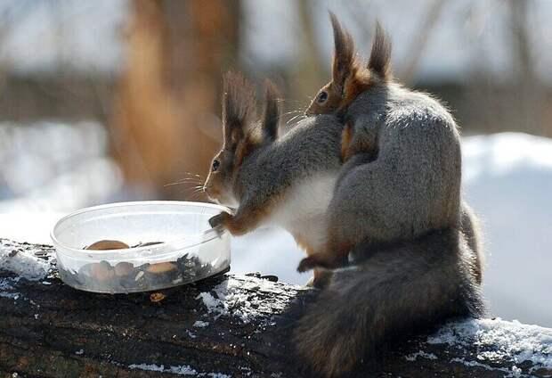 Как тут не взбеситься, когда даже поесть нормально не дают!